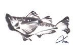 """県民魚と言われる冬の名物""""はたはた"""""""