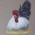 """""""Coq blanc et noir""""  - acrylique - 30 x 30 cm"""