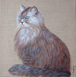"""""""Chat aux yeux bleus"""" - acrylique - 30 x 30 cm"""