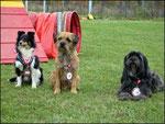 Sheltie Belinda,  Tibet-TerrierToska  sowie  Border Terrier Audrey