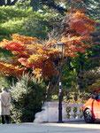 Herbststimmung im Burggarten