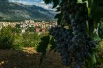 Pratola Peligna, paesaggio con uvaMontepulciano