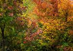 Parco Nazionale d'Abruzzo, Lazio e Molise, autunno