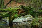 Parco Nazionale d'Abruzzo, Lazio e Molise, torrente Fondillo