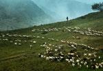 Parco Nazionale d'Abruzzo, Lazio e Molise, pastore