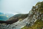 Parco Nazionale d'Abruzzo, Lazio e Molise, camoscio a Val di Rose