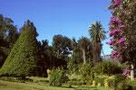 Botanischer Garten von Peradeniya und seltenen tropischen Bäumen