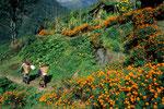 Im Tagetesgarten