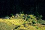 Einsames Gehöft in Reisfeldern I