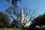 Anuradhapura - Ruvanveli Dagoba mit Bergkristall auf der Spitze -