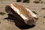 versteinerter Baumstamm I