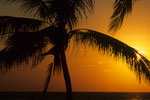 Auf ein Wiedersehen unter Palmen!