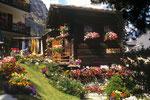 Zermatt; Hütte im Blumenmeer.