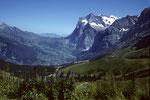 Wetterhorn 3701 m und Grindelwald im Tal