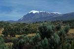 Ginster- und Erikabüsche im Vordergrund und Kilimanjaro  5895 m