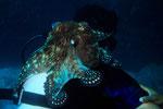 Krake Octopus macropus taucht mit !