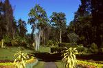 Botanischer Garten von Peradeniya - einer der schönsten botanischen Gärten der Welt.