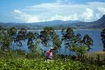 Teeplantagen bei Maskeliya - Tee, das grüne Gold Sri Lankas