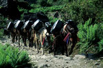 Nepalischer Tanklastzug