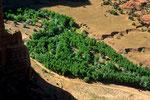 Abschiedsblick in den Canyon - Tele -