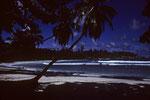 Petite Anse bei Vollmond unter Palmen auf La Dique