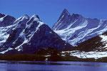 Bachalpsee mit Finsteraarhorn  4273m