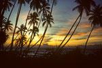 Abendstimmung am palmengesäumten Meer
