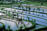 Reisfelder von Tirta Gangga - Spiegel des Himmels -