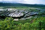 Reisfelder von Tirta Gangga