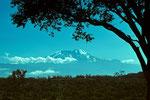 Kilimanjaro  5895 m von Momella