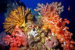 Riff - Schönheiten