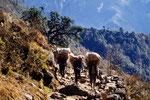 Träger ist ein anerkannter Beruf in Nepal