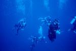 Zu den Unterwasser-Schönheiten.