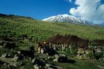 Nomadenlager und Ararat