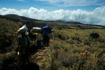 Trekking zu den Horombo-Hütten