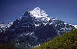 Wetterhorn 3701 m vom First