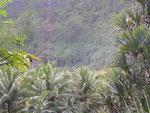 Anse des cascades-Route des coulées-sud sauvage-6-11-05