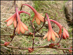 Cascade maniquet-31-10-05