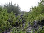 La végétation reprend ses droits-sud sauvage-6-11-05