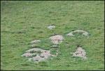 Les marmottes, difficile d'approcher