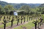 Sommelier wine tour Austria