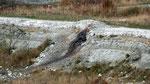 Photo prise le 11/11/2008 d'un dyke non retrouvé lors de notre visite