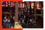 20. Dezember    Weihnacht im Föhrenwald Hornstein