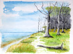 """Gespensterwald"" bei Nienhagen / Ostsee - Aquarell 30 x 40 cm"