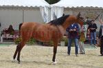 CHAMPIONNAT DE FRANCE 2014 A POMPADOUR - KOHINOUR DE CARTHEREY - 49
