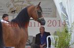 CHAMPIONNAT DE FRANCE 2014 A POMPADOUR - KOHINOUR DE CARTHEREY - 03