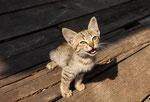 lotsa kitties here