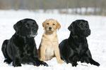 Januar 2015 Cora, Maggie und Elsie