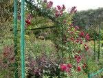 モネの庭園の薔薇