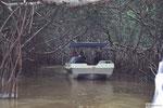 Mangrovenwälder Celestun